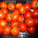 tomates ferme de bonne Esperance
